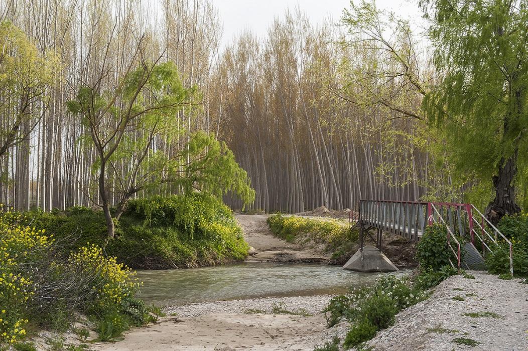 <p>El río Genil, a su paso por Fuente Vaqueros.</p>