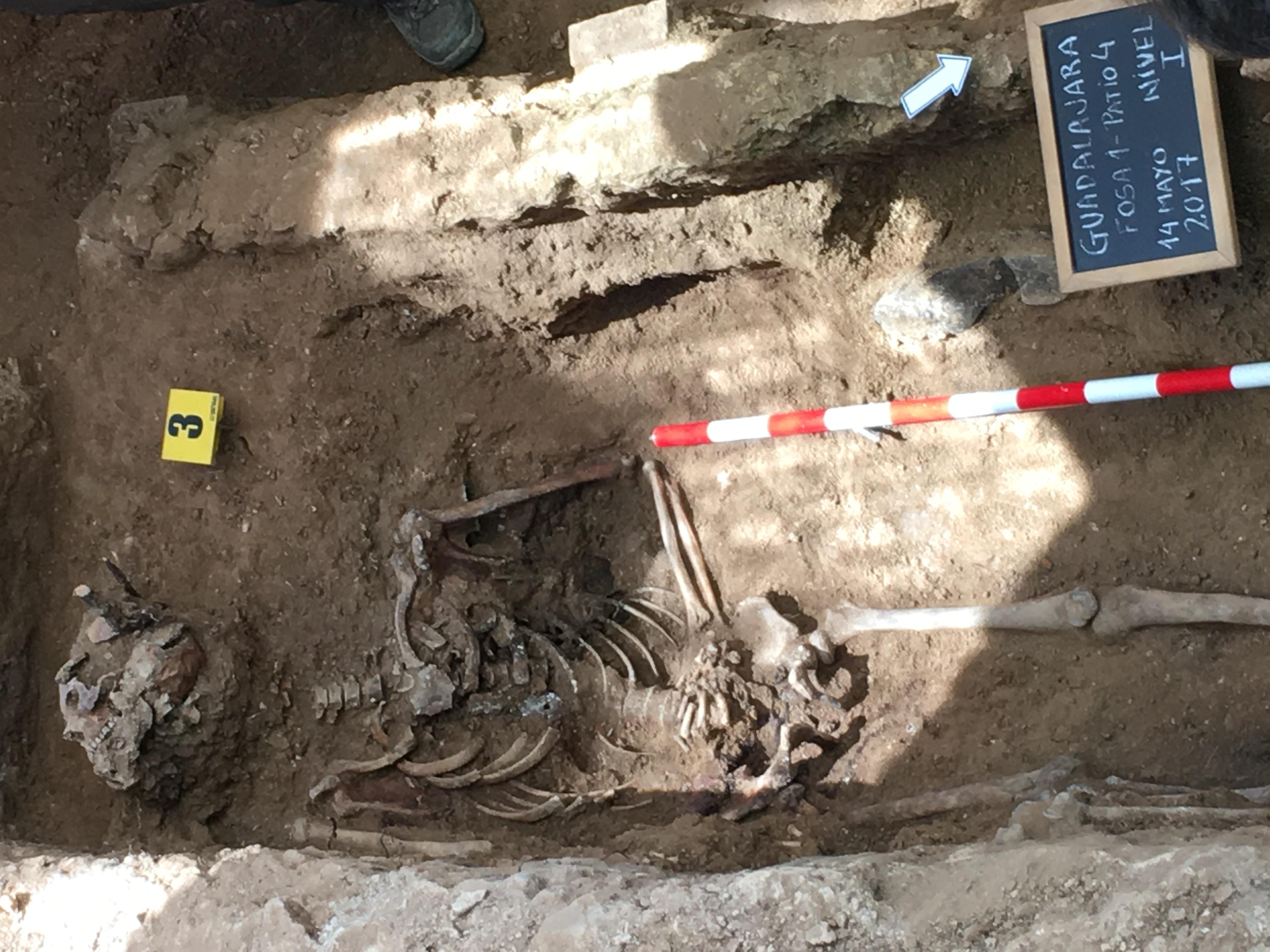 <p>Restos del individuo número 3, encontrados en la fosa número 1 del cementerio de Guadalajara.</p>